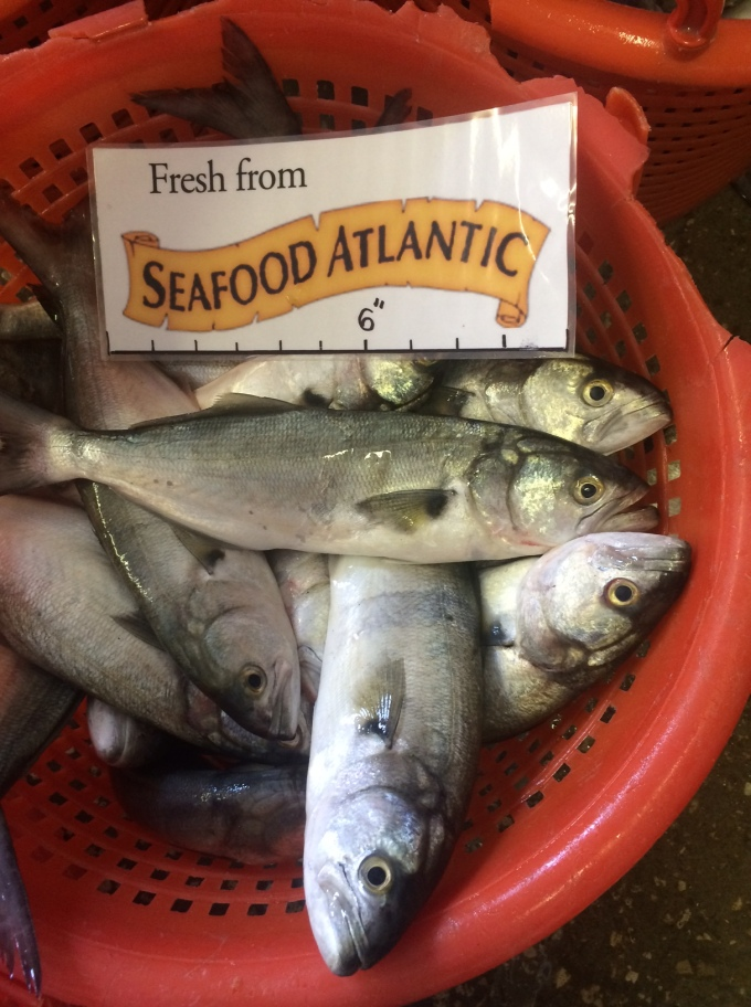 A bountiful basket of Blues and Spanish Mackerel, a fisherman favorite