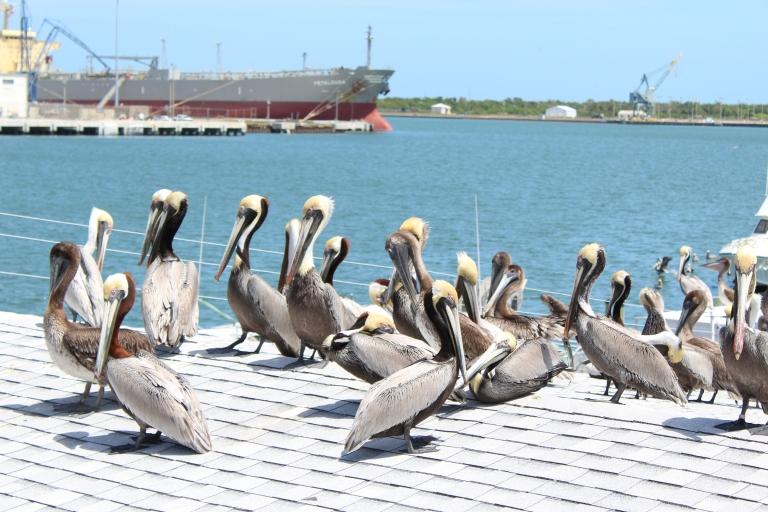 Seafood Atlantic Pelicans