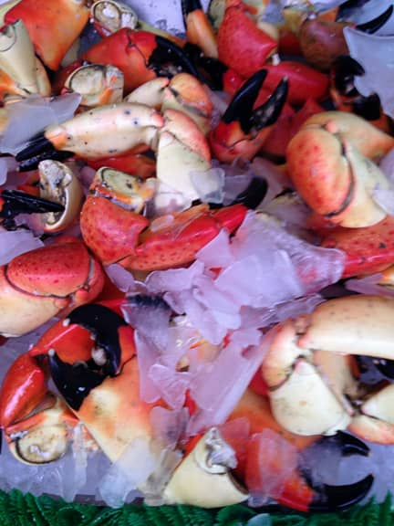Stone crab seafood atlantic